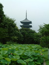 Koubouichi